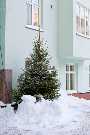 Finland, Helsinki, Christmas tree in snow by apartment buildingの写真素材 [FYI02203321]