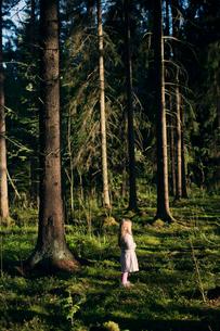Finland, Paijat-Hame, Heinola, Girl (4-5) standing in spruce forestの写真素材 [FYI02203444]