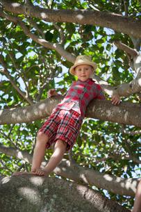 Australia, Queensland, Sunshine Coast, Boy (6-7) standing on tree branchの写真素材 [FYI02204417]
