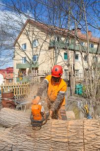Sweden, Sodermanland, Arborist cutting logの写真素材 [FYI02204555]