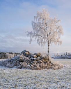 Sweden, Uppland, Hatuna, View of winter sceneの写真素材 [FYI02204655]