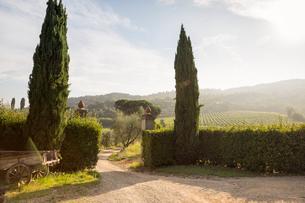Italy, Tuscany, Dicomano, Dirt road leading to vineyardの写真素材 [FYI02204940]