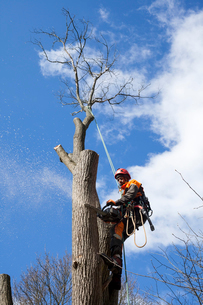 Sweden, Sodermanland, Arborist cutting tree trunkの写真素材 [FYI02205072]