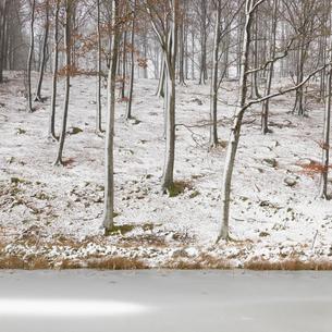Sweden, Skane, Stenestad, Bare beech trees (Fagus sylvatica) in winter forest by frozen lakeの写真素材 [FYI02205075]