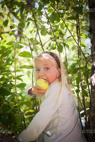 Sweden, Medelpad, Portrait of blonde girl (4-5) eating appleの写真素材 [FYI02205088]