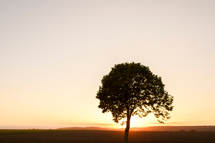 Sweden, Ostergotland, Silhouette of tree at sunsetの写真素材 [FYI02205127]