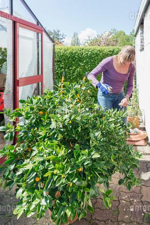 Sweden, Skane, Woman standing by potted lemon treeの写真素材 [FYI02205152]