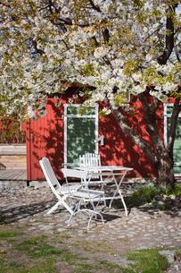 Sweden, Vastmanland, Vasteras, White table and chairs under cherry treeの写真素材 [FYI02205171]