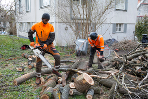 Sweden, Sodermanland, Arborists cutting logsの写真素材 [FYI02205208]
