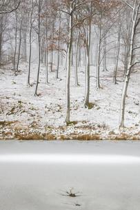 Sweden, Skane, Stenestad, Bare beech trees (Fagus sylvatica) in winter forest by frozen lakeの写真素材 [FYI02205306]