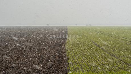 Sweden, Oland, Grasgard, Rural scene with blizzardの写真素材 [FYI02205339]
