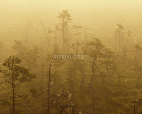 Sweden, Smaland, Store Mosse National Park in fogの写真素材 [FYI02205343]