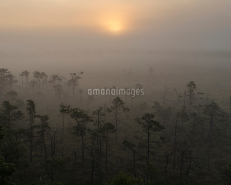 Sweden, Smaland, Store Mosse National Park in fogの写真素材 [FYI02205428]