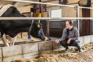 Sweden, Skane, Female dairy farmer at workの写真素材 [FYI02205537]