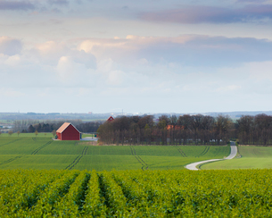 Sweden, rural scene with fields and groveの写真素材 [FYI02205724]