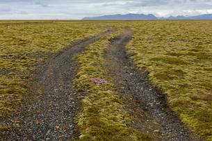 Iceland, Sudurland, Dirt road through wilderness towards mountain range on horizonの写真素材 [FYI02206123]