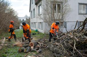 Sweden, Sodermanland, Arborists cutting logsの写真素材 [FYI02206253]