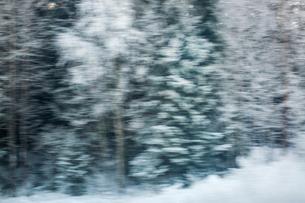 Sweden, Sodermanland, Strangnas, Snowy trees in forestの写真素材 [FYI02206406]