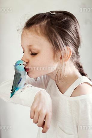 Sweden, Girl (8-9) kissing blue pet birdの写真素材 [FYI02206531]