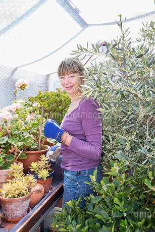 Sweden, Skane, Woman gardening in greenhouseの写真素材 [FYI02206532]