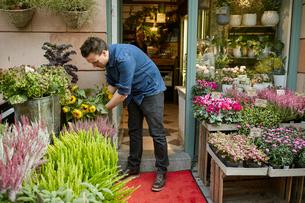 Sweden, Florist working in flower shopの写真素材 [FYI02206677]