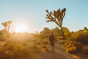 USA, California, Joshua Tree National Park, Man hiking at sunsetの写真素材 [FYI02206822]