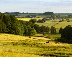 Sweden, Skane, Hunnestad, idyllic rolling landscape with grazing horsesの写真素材 [FYI02206860]