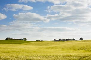 Sweden, Skane, idyllic rolling landscapeの写真素材 [FYI02207001]