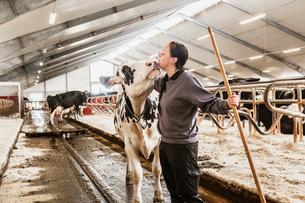 Sweden, Skane, Female dairy farmer at workの写真素材 [FYI02207066]