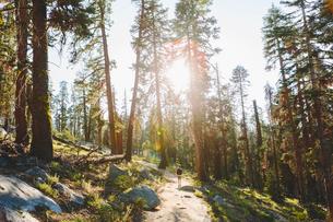 USA, California, Yosemite National Park, Man hiking at Taft Point Trailの写真素材 [FYI02207120]