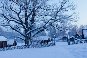 Sweden, Dalarna, Mora, Wooden houses covered with snowの写真素材 [FYI02207134]