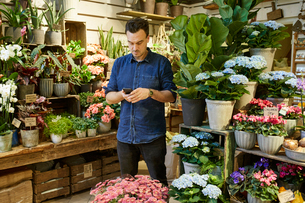 Sweden, Florist using smart phone in flower shopの写真素材 [FYI02207158]