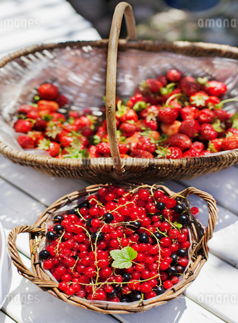 Baskets of redcurrants and strawberriesの写真素材 [FYI02207249]
