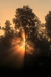 Sunbeam through trees at dawn in Narke, Swedenの写真素材 [FYI02207452]