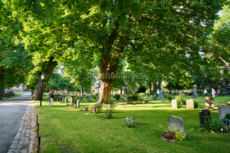 Sweden, Sodermanland, Stockholm, Green grass and trees in cemeteryの写真素材 [FYI02207480]