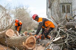 Sweden, Sodermanland, Arborists cutting logsの写真素材 [FYI02207558]