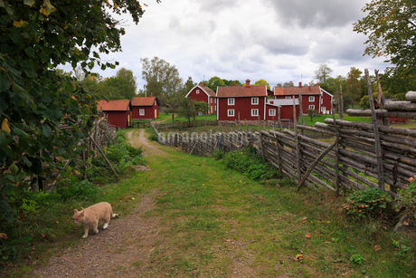 Red rural houses in Stensjo by, Swedenの写真素材 [FYI02207698]