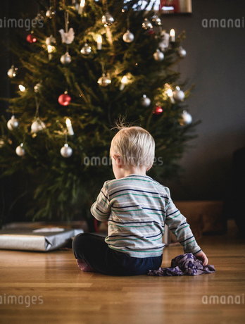 Rear view of boy sitting by Christmas tree in Swedenの写真素材 [FYI02207785]