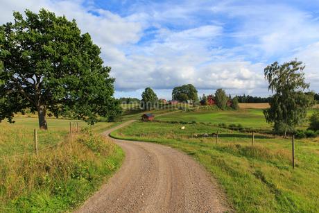 Rural road in Hult, Swedenの写真素材 [FYI02207788]