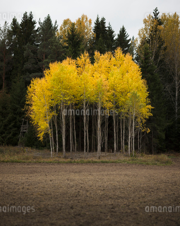 Trees in Soderasens National Park in Skane, Swedenの写真素材 [FYI02207790]