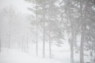 Snow covered fields in Swedenの写真素材 [FYI02207809]