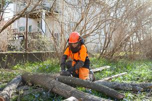 Sweden, Sodermanland, Arborist cutting logの写真素材 [FYI02207834]