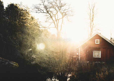 Sun shining through trees in Alta, Swedenの写真素材 [FYI02207930]