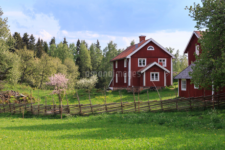 Houses by a field in Smaland, Swedenの写真素材 [FYI02207944]