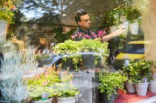 Sweden, Florist working in flower shopの写真素材 [FYI02207964]