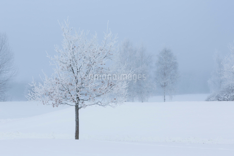Snow covered ground in Swedenの写真素材 [FYI02207971]