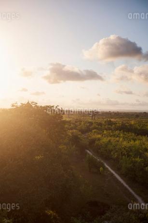 Sunset over trees in Kenyaの写真素材 [FYI02207983]