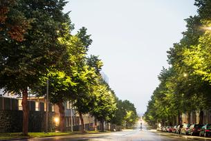 Finland, Pirkanmaa, Tampere, Road between treesの写真素材 [FYI02207999]