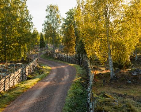 Rural road in Smaland, Swedenの写真素材 [FYI02208004]