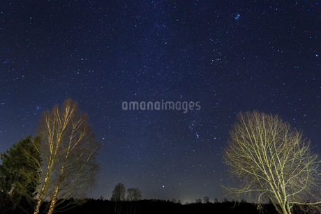 Bare trees under a starscape in Narke, Swedenの写真素材 [FYI02208057]
